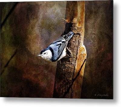 Inquisitive Nuthatch Metal Print by J Larry Walker