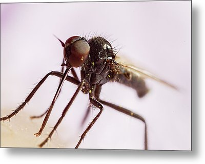 Insect Extreme Macro Fly With Pollen Metal Print