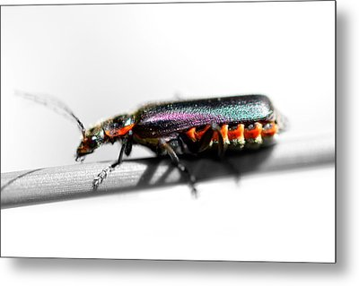 Insect On A Stick Metal Print by Tommytechno Sweden