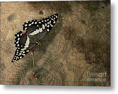 Insect Study Number 30 Metal Print by Floyd Menezes