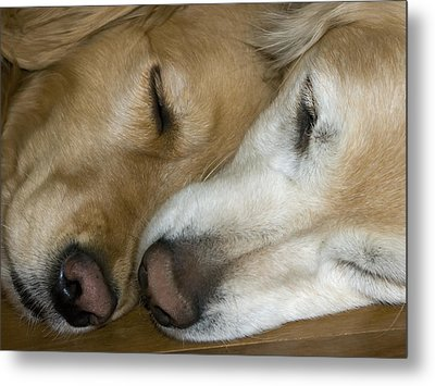 Inseparable Metal Print by Rhonda McDougall