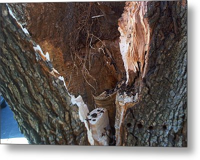 Metal Print featuring the photograph Inside A Bradford Pear Tree by Emmy Marie Vickers