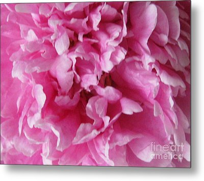 Metal Print featuring the photograph Inside A Pink Peony by Margaret Newcomb