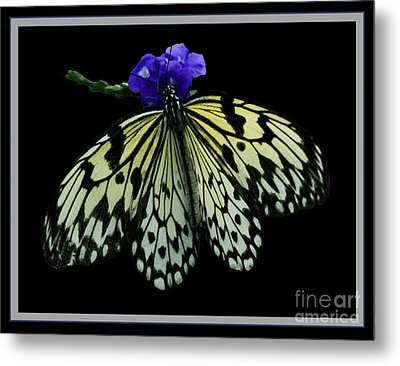Inspired By Butterflies  Metal Print by Inspired Nature Photography Fine Art Photography
