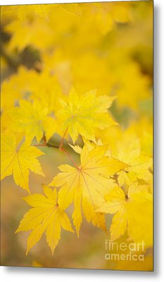 Intensely Yellow Metal Print by Anne Gilbert