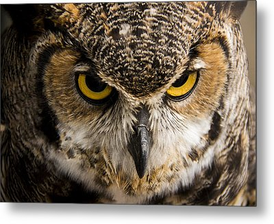 Intensity Metal Print