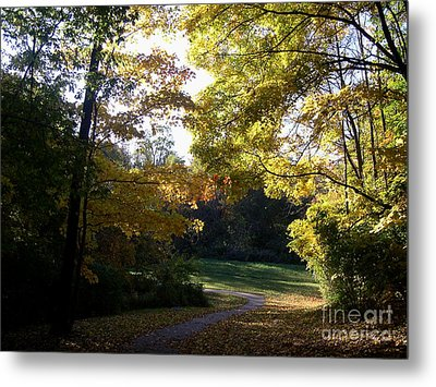 Into His Light Metal Print by Mel Steinhauer