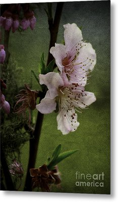 Metal Print featuring the photograph Into Spring by Lori Mellen-Pagliaro