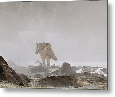 Metal Print featuring the photograph Into The Mist by Yeates Photography