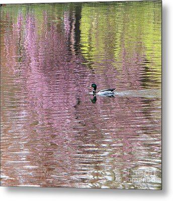 Into The Pink Metal Print by Karin Ubeleis-Jones