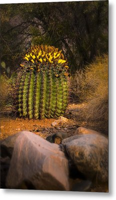 Metal Print featuring the photograph Into The Prickly Barrel by Mark Myhaver