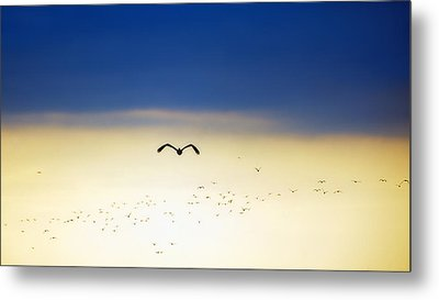 Into The Sunset Metal Print by Tammy Smith
