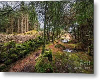 Into The Woods Metal Print by Adrian Evans