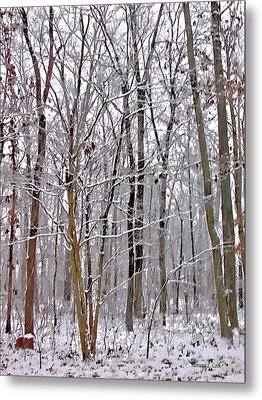 Into The Woods Metal Print by Bellesouth Studio
