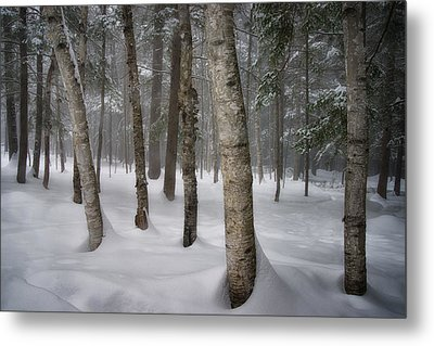 Into The Woods Metal Print by Darylann Leonard Photography