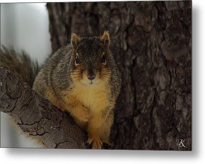 Intrigued Squirrel  Metal Print