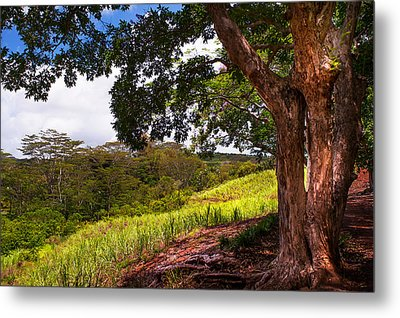 Invitation To Shadow Place. Chamarel. Mauritius Metal Print by Jenny Rainbow