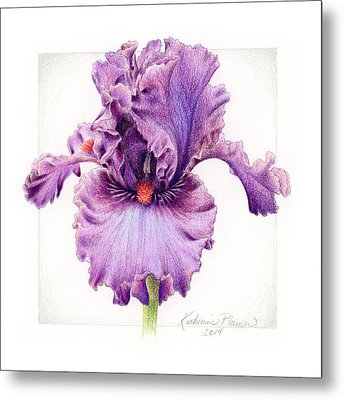 Iris 1 Asian Plum Metal Print by Katherine Plumer