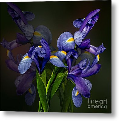 Metal Print featuring the photograph Iris Fantasy by Shirley Mangini