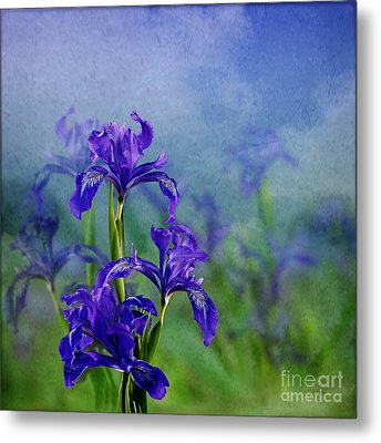 Iris Garden Metal Print by Shirley Mangini