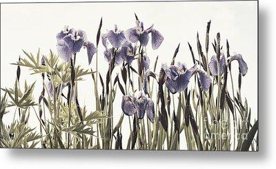 Iris In The Park Metal Print by Priska Wettstein