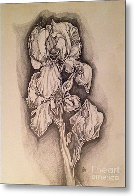 Metal Print featuring the drawing Iris by Iya Carson