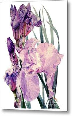 Watercolor Of An Elegant Tall Bearded Iris In Pink And Purple I Call Iris Joan Sutherland Metal Print