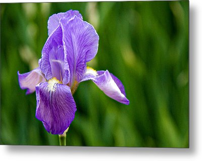 Metal Print featuring the photograph Iris by Lana Trussell