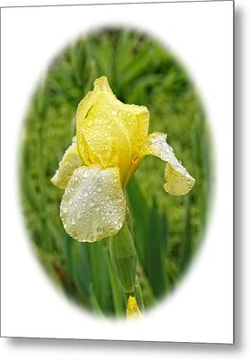 Iris Madi Moonlight Metal Print by Paul Gulliver