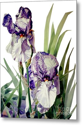 Blue-violet And White Picata Iris Selena Marie Metal Print by Greta Corens