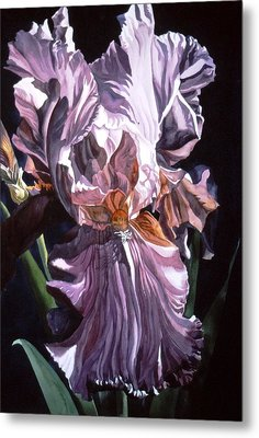 Iris With Light Metal Print by Alfred Ng