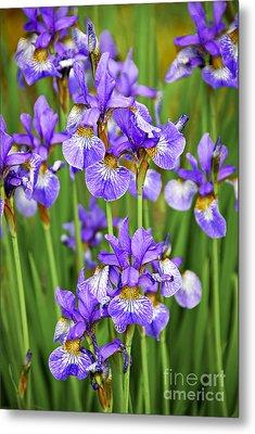 Irises Metal Print by Elena Elisseeva