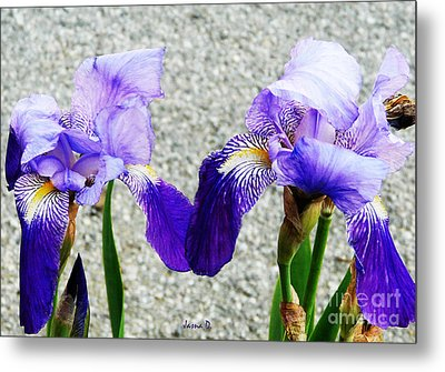 Metal Print featuring the photograph Irises by Jasna Dragun