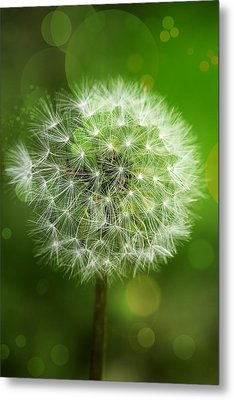 Irish Dandelion Metal Print by Bill Tiepelman