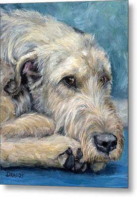 Irish Wolfhound Lying Metal Print by Dottie Dracos