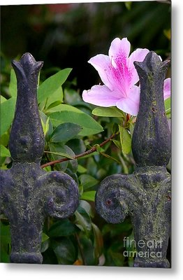 Metal Print featuring the photograph Iron Fence With Azalea by Jeanne  Woods