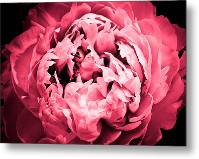 Irresistible Metal Print by Julie Andel