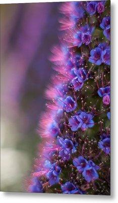 Irridescent Purple Glow Metal Print