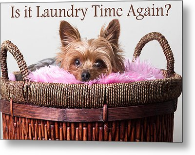 Is It Laundry Time Again? Metal Print by Purple Moon