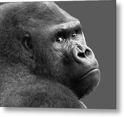 Is That A Chip On My Shoulder Metal Print by Nikolyn McDonald