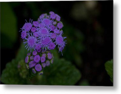 Metal Print featuring the photograph Is That Purple by Greg Graham