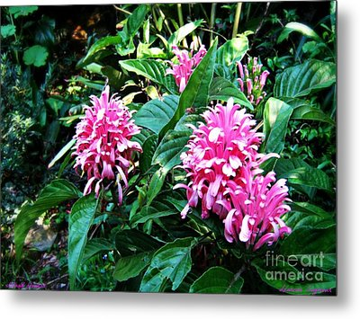 Metal Print featuring the photograph Island Flower by Leanne Seymour