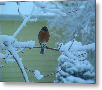 Isn't It Spring Yet? Metal Print