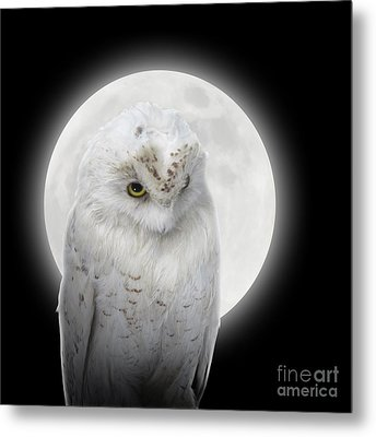 Isolated White Owl In Night With Moon Metal Print by Angela Waye