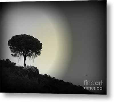 Metal Print featuring the photograph Isolation Tree by Clare Bevan