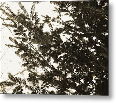 Metal Print featuring the photograph It Feels Like Winter... by Zinvolle Art