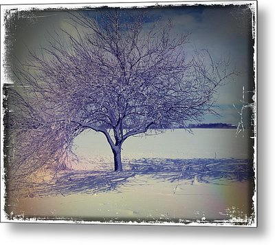 It Might Be An Apple Tree Metal Print