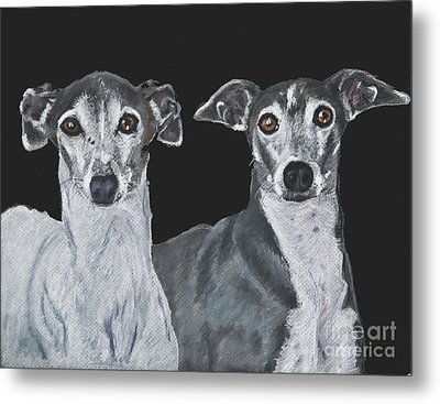 Italian Greyhounds Portrait Over Black Metal Print by Kate Sumners