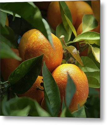 Metal Print featuring the photograph Italian Oranges by Michael Flood