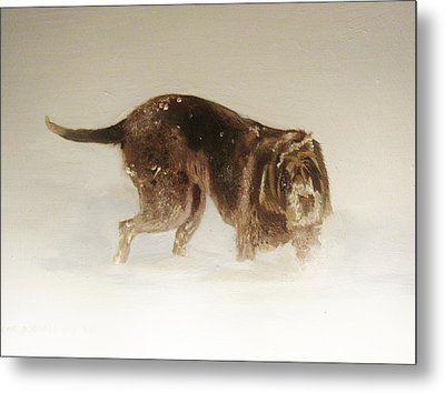 Italian Spinone In The Snow Metal Print